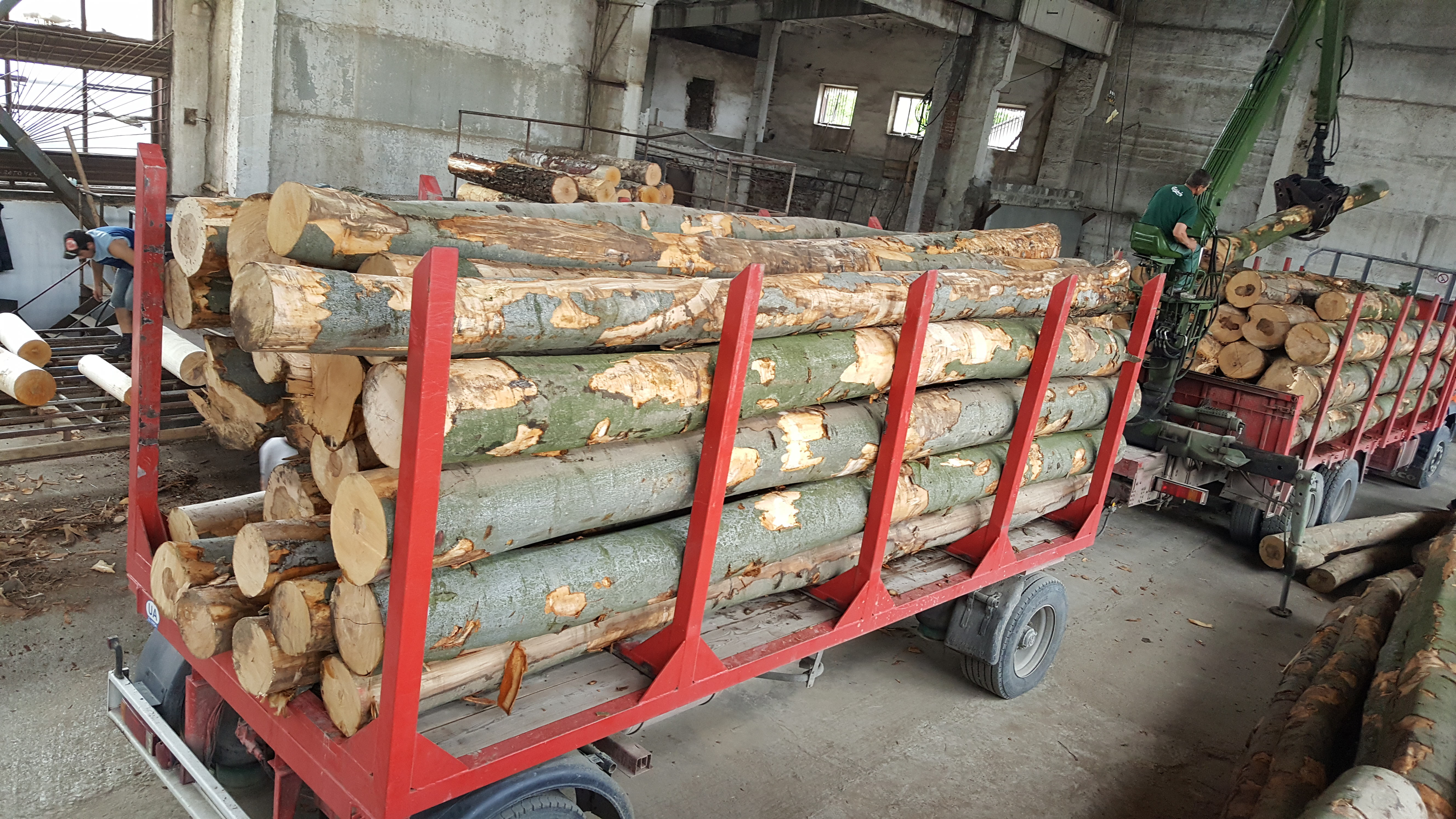 Beech log supply